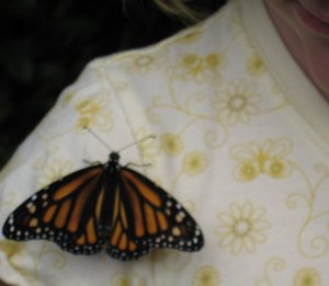 Kid2 & Monarch Butterfly