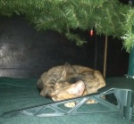 I should take a cue from Kitty Girl and chill under the tree. It's no big deal!