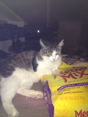 Gus hangs out on the big bag of cat food.