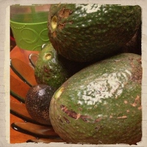 Avocado season!