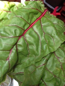 Swiss chard. Love how big these get!