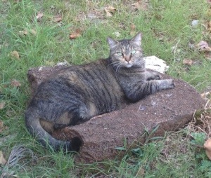 Comet blended in well with the rocks in our yard.