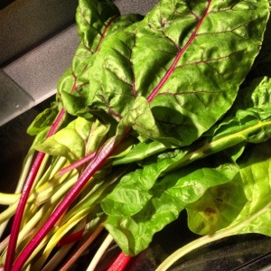 Fresh from the garden, a rainbow of Swiss chard.
